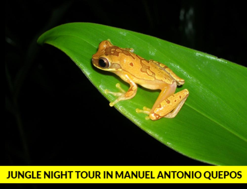 Jungle Night Tour in Manuel Antonio Quepos