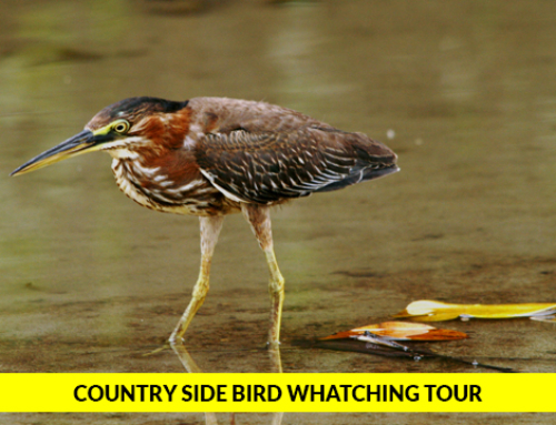 Country Side Bird Watching Tour