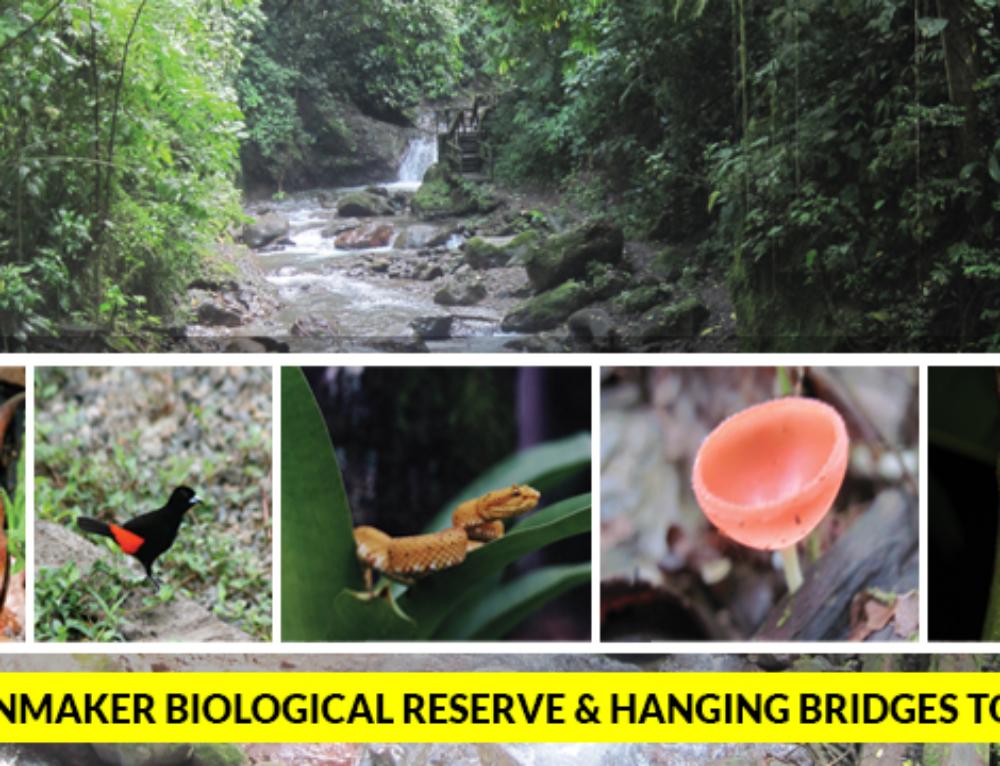 Rainmaker Biological Reserve & Hanging Bridges Tour